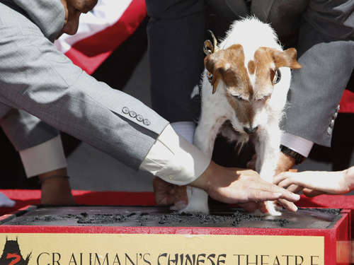 """The Artist""-Star Uggie mit Pfoten in Hollywood verewigt"