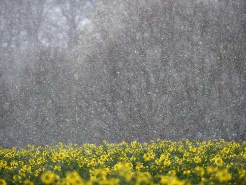 Tristes Wetter: Winter bis in den Mai?