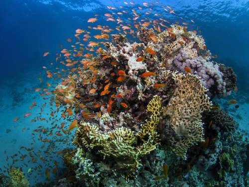 Dreckwasser strömt ins Great Barrier Reef